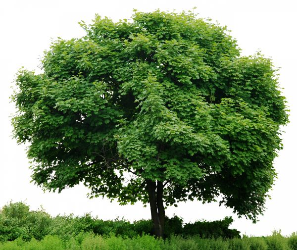 fa állapot