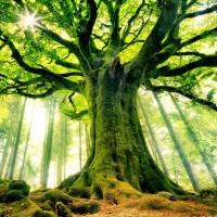 A Fa állapotról